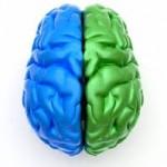 Os 2 hemisférios do cérebro