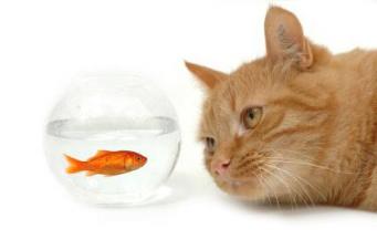 gato-e-peixe1